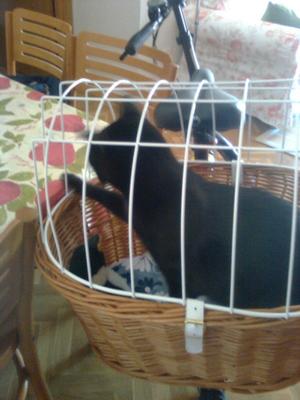 Mi gato Fray en la cesta de la bici